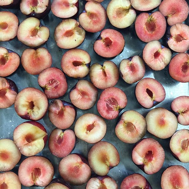 Plums glorious plums! They didn't taste as good as they looked so we juiced some and roasted the rest! The juice we'll use as the sweetener for the granola (instead of sugar). The roasted plums will be turned into fruit leather (that the kids love)! Just another day at the kitchen processing hundreds of pounds of food that would of been thrown away.