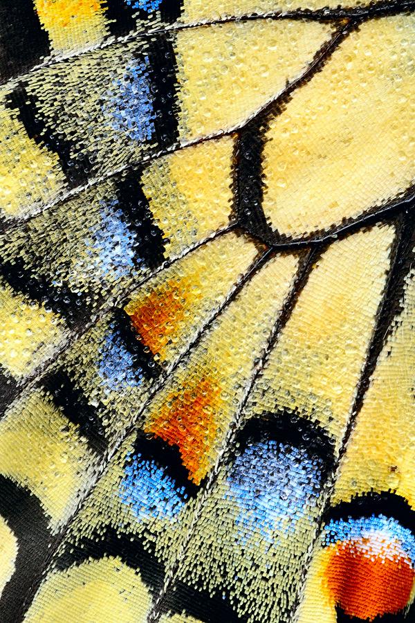 natural pattern!
