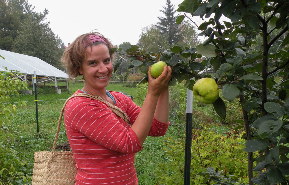 Farmer Erin harvesting quince