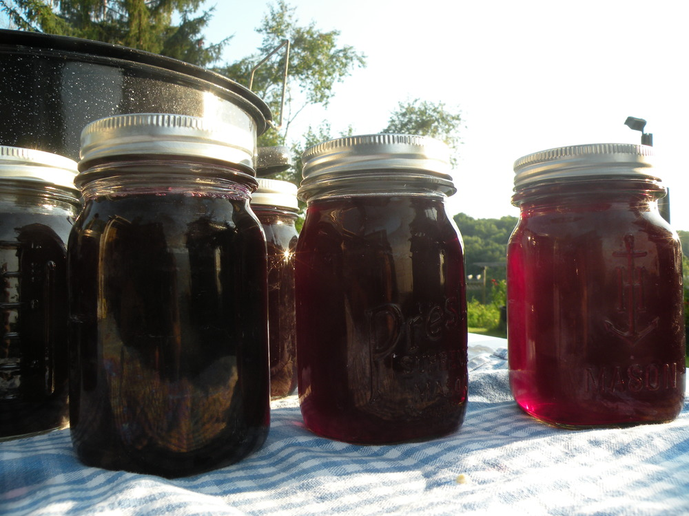Elderberry juicing 2014