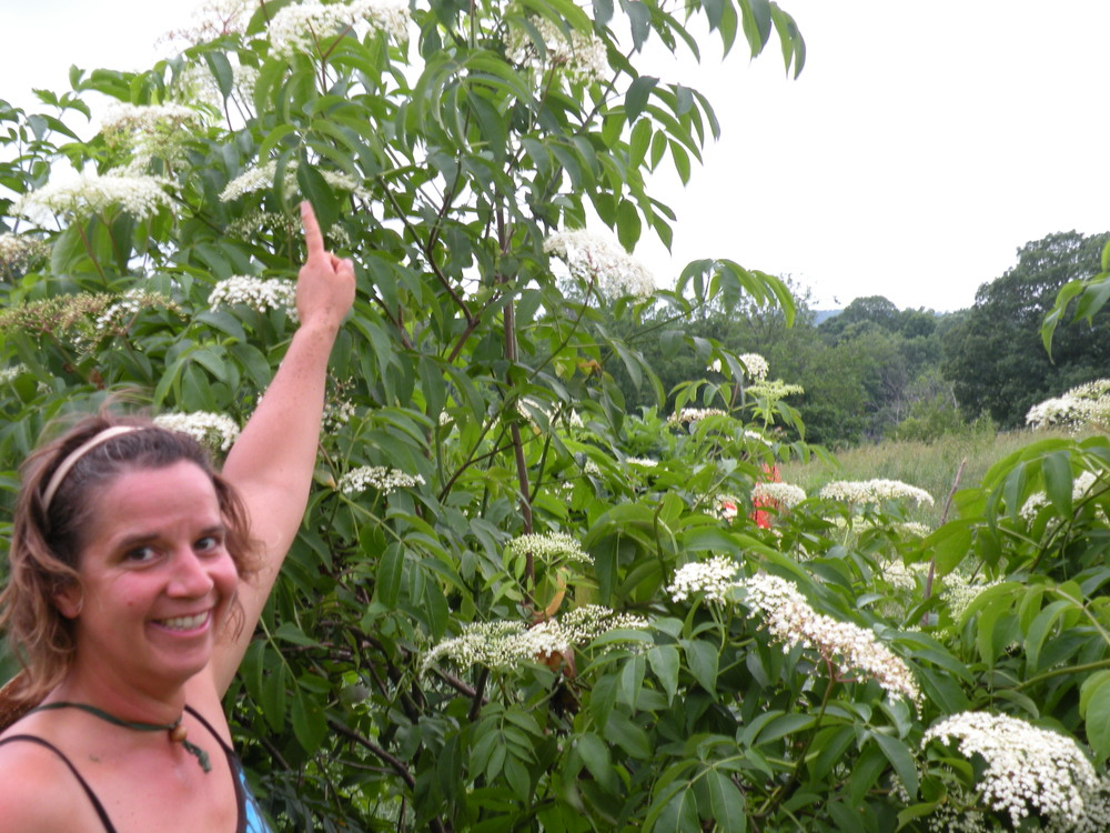Help our farm and our elderberries grow into their own with a fence lift.