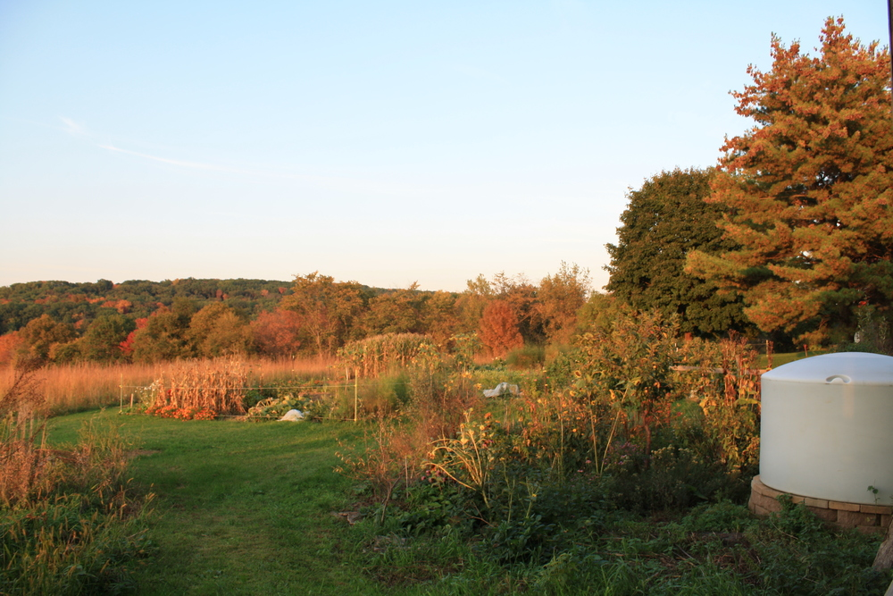 Fall viewpoints of the CSA gardens and water storage.