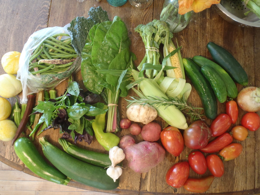 Typical mid-August CSA share
