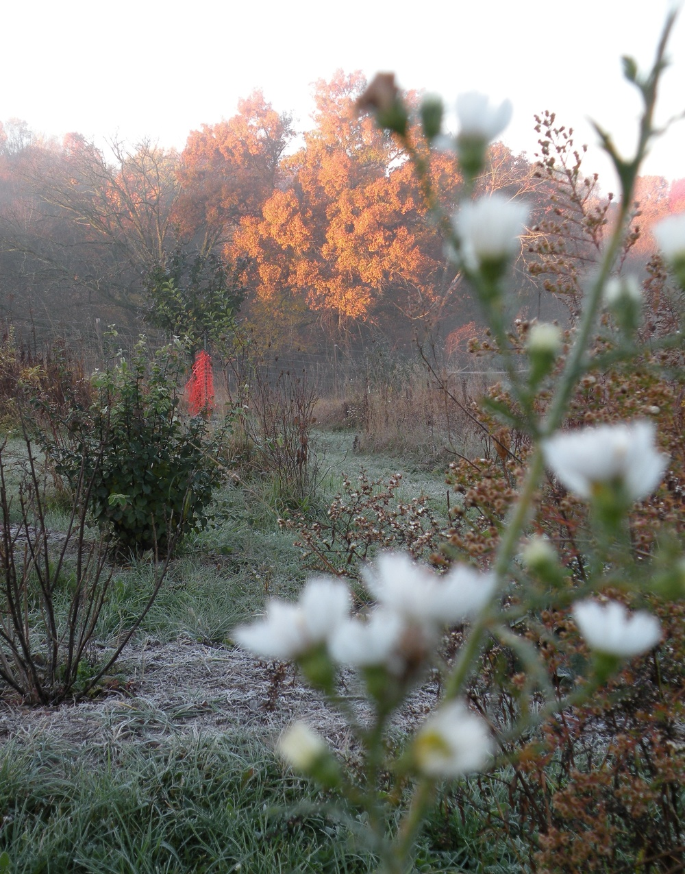 Fall Frost, Flower Dormancy