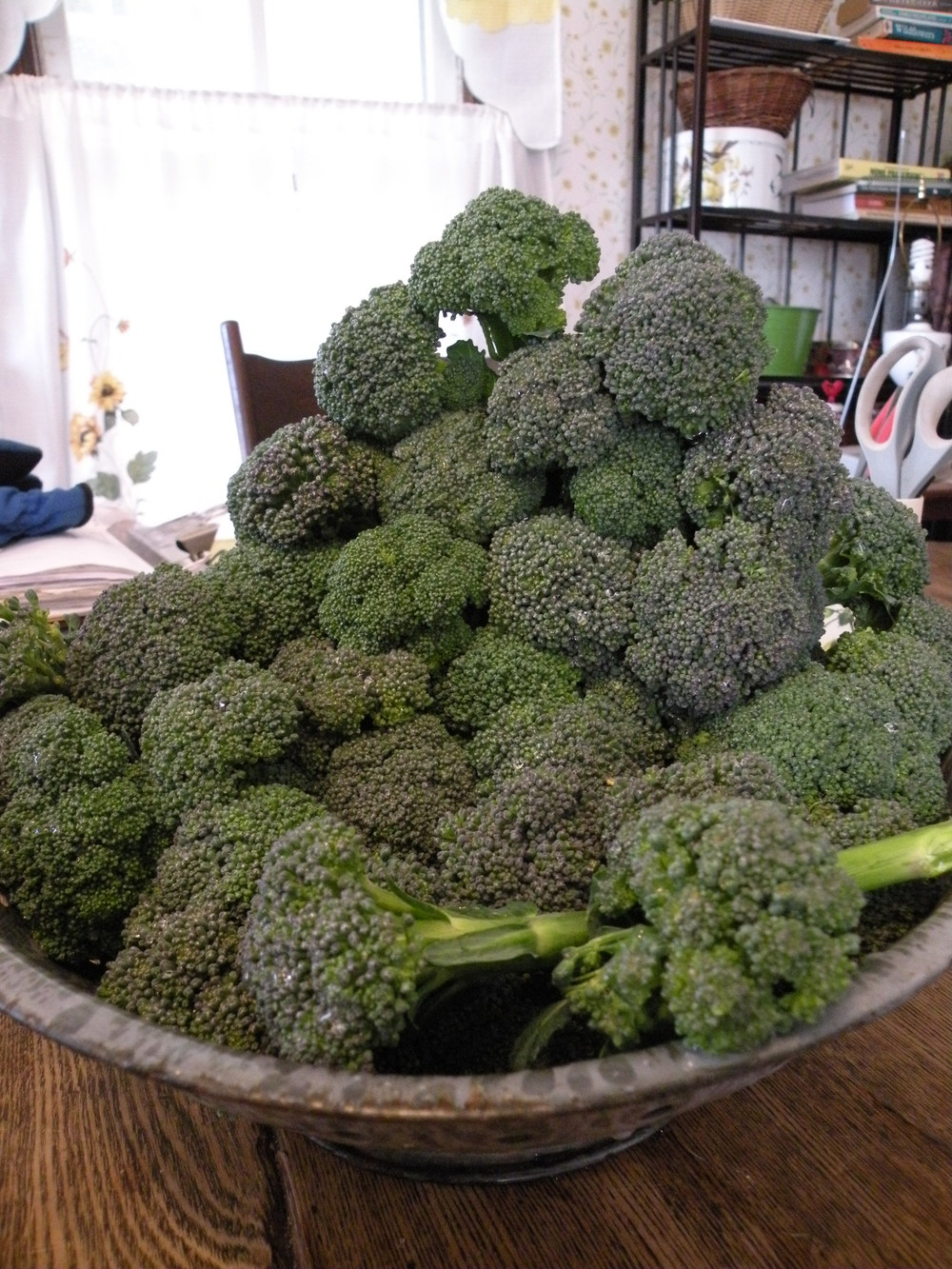 Broccoli Mt. Harvest High...We enjoyed fresh broccoli for over 15 deliveries.