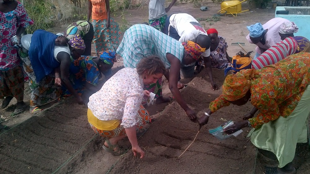 seeding vegetable beds for trialing different varieties of tomato  pepper and onion with Kembu farmers in Senegal