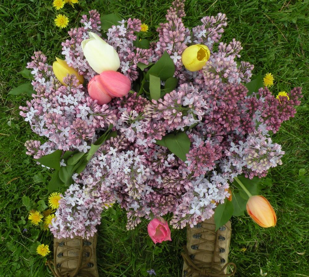 Lilac abundance.jpg