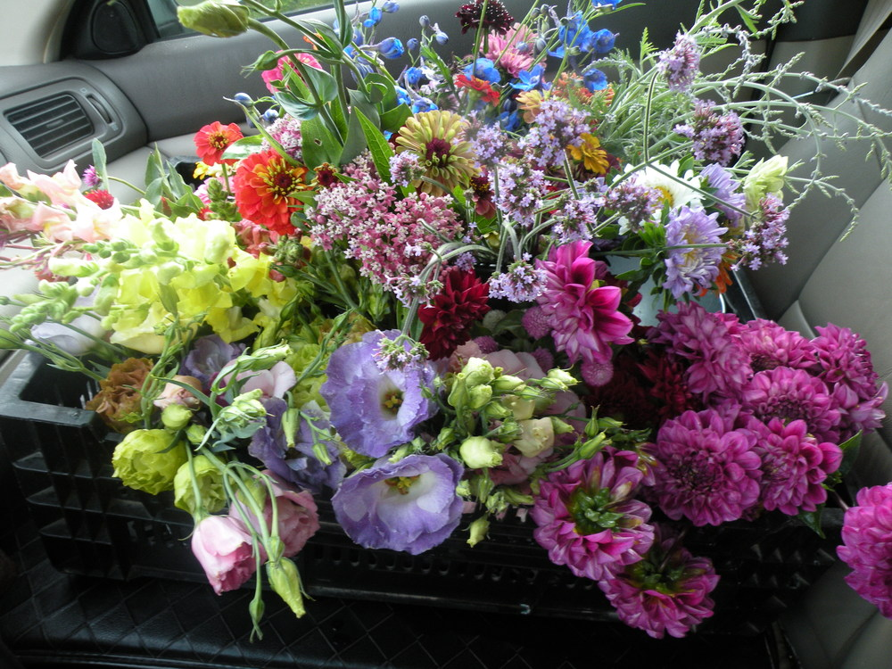 Flowers in the driver seat en route to bouquet making for July 23 wedding celebration
