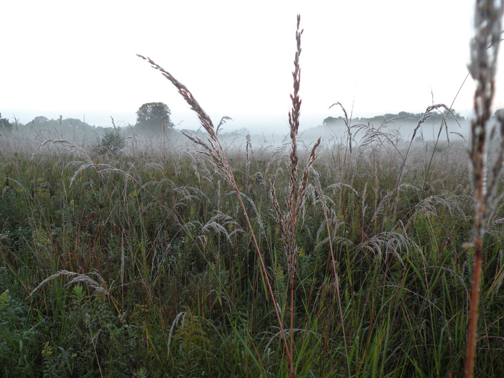 Morning fog over our prairie. Photo by Erin Schneider