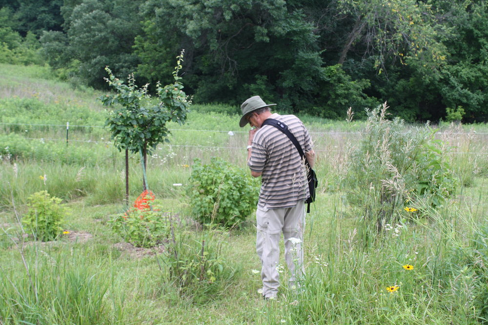Farm member touring our young food forest guilds in the orchard. Photo by Ian Aley