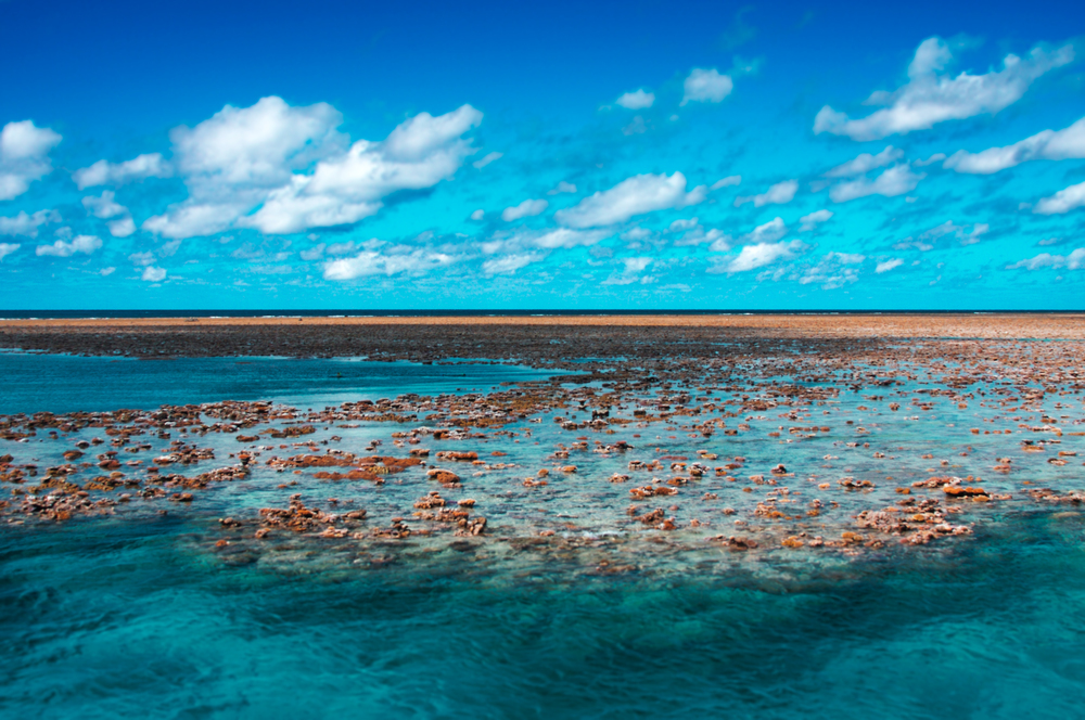 Low_Tide_at_Hastings_Reef.jpg