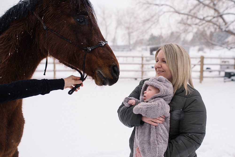 A baby checks out a horse at his family's property in Fort Collins, Colorado. Family portrait photography by Sonja Salzburg of Sonja K Photography.