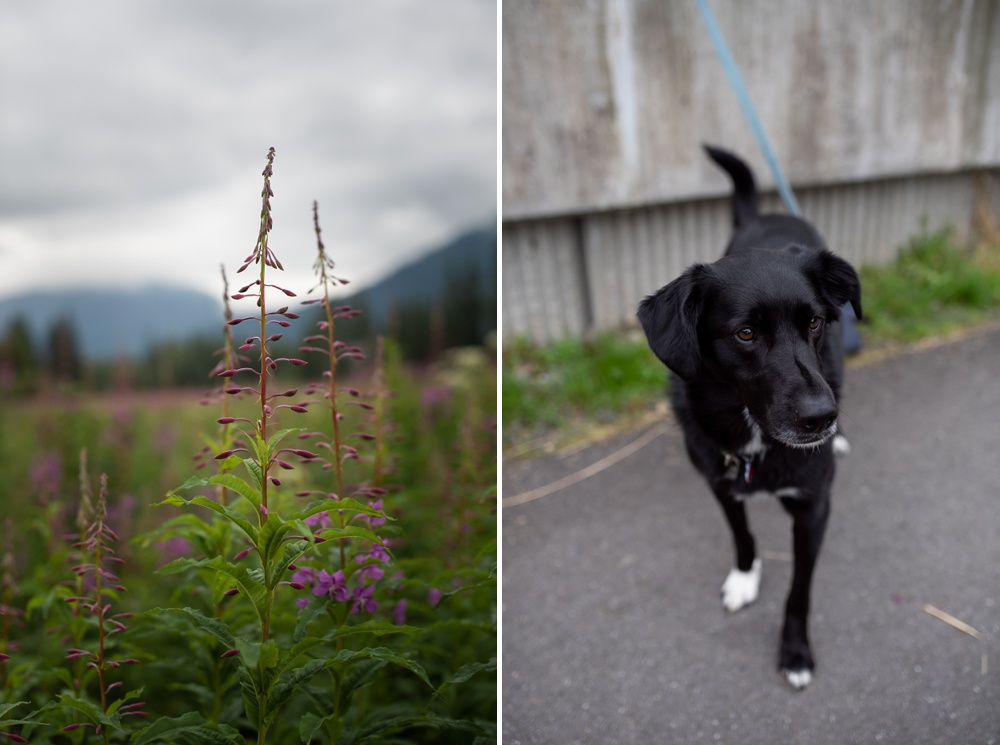 Archer the dog at an engagement session in Juneau, Alaska. Engagement portrait photography by Sonja Salzburg of Sonja K Photography.