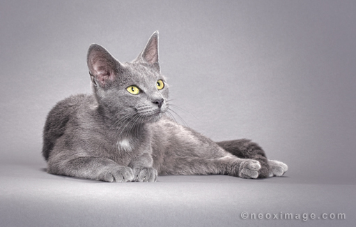 "Photographer David Lloyd took the time to shoot ""Momma"" the studio cat. Grey on grey."