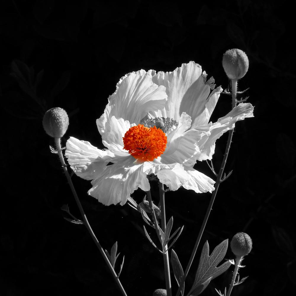 Earth laughs in flowers - Ralph Waldo Emerson https://www.flickr.com/photos/zedzap/20022073588/Nick Kenrick
