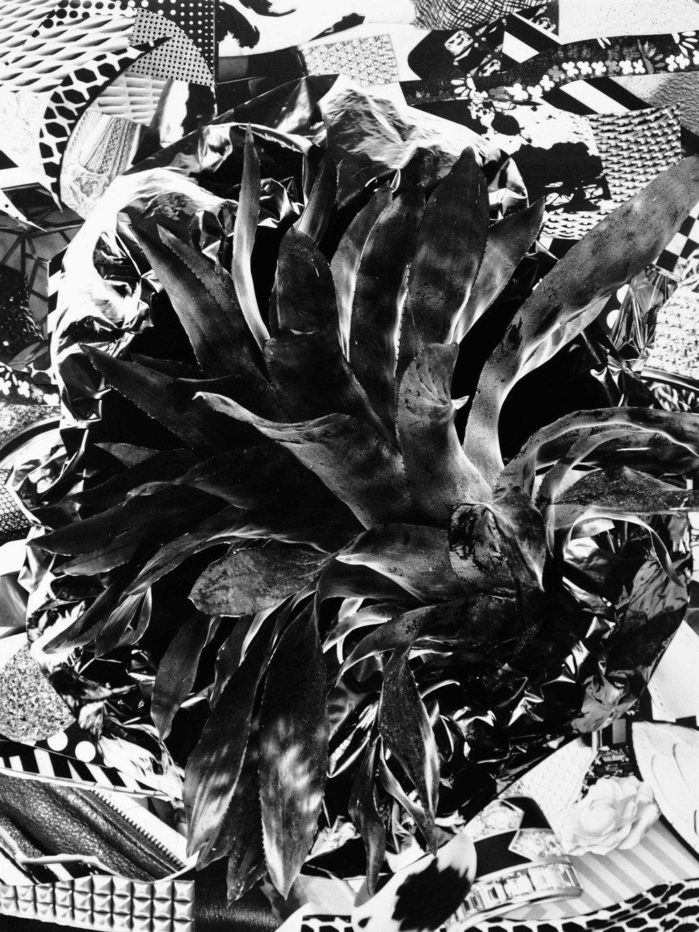Fay Ray  Bromeliad, 2015  Polyvinyl acetate, sumi ink, and archival pigment prints  22 x 1 7 inches