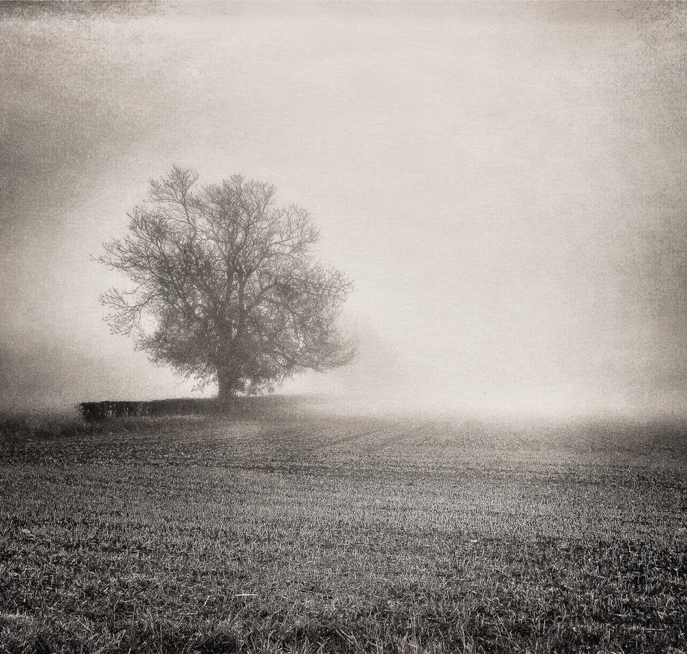 Lone Tree Foggy Morning.jpg
