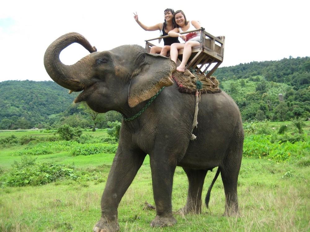 elephant-chiangmai.jpg