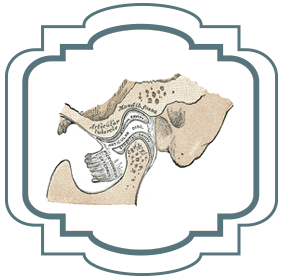 Jaw tooth diagram