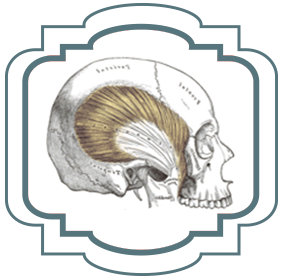 Skull and tooth diagram