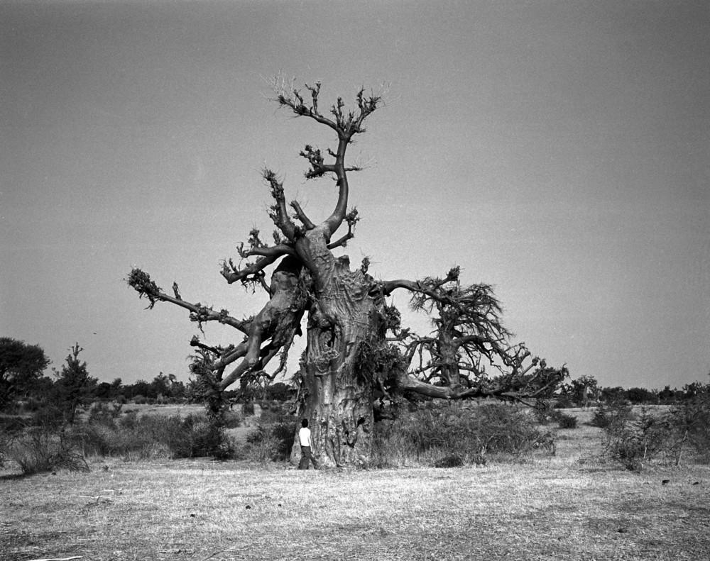 +36baobab tree.jpg