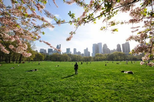 Sheep's Meadow in Central Park