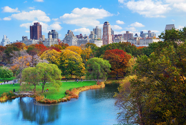 Central Park with NY Skyline