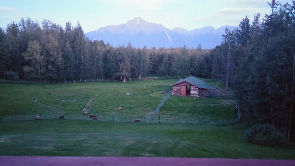 This is my view out my back door in Alaska