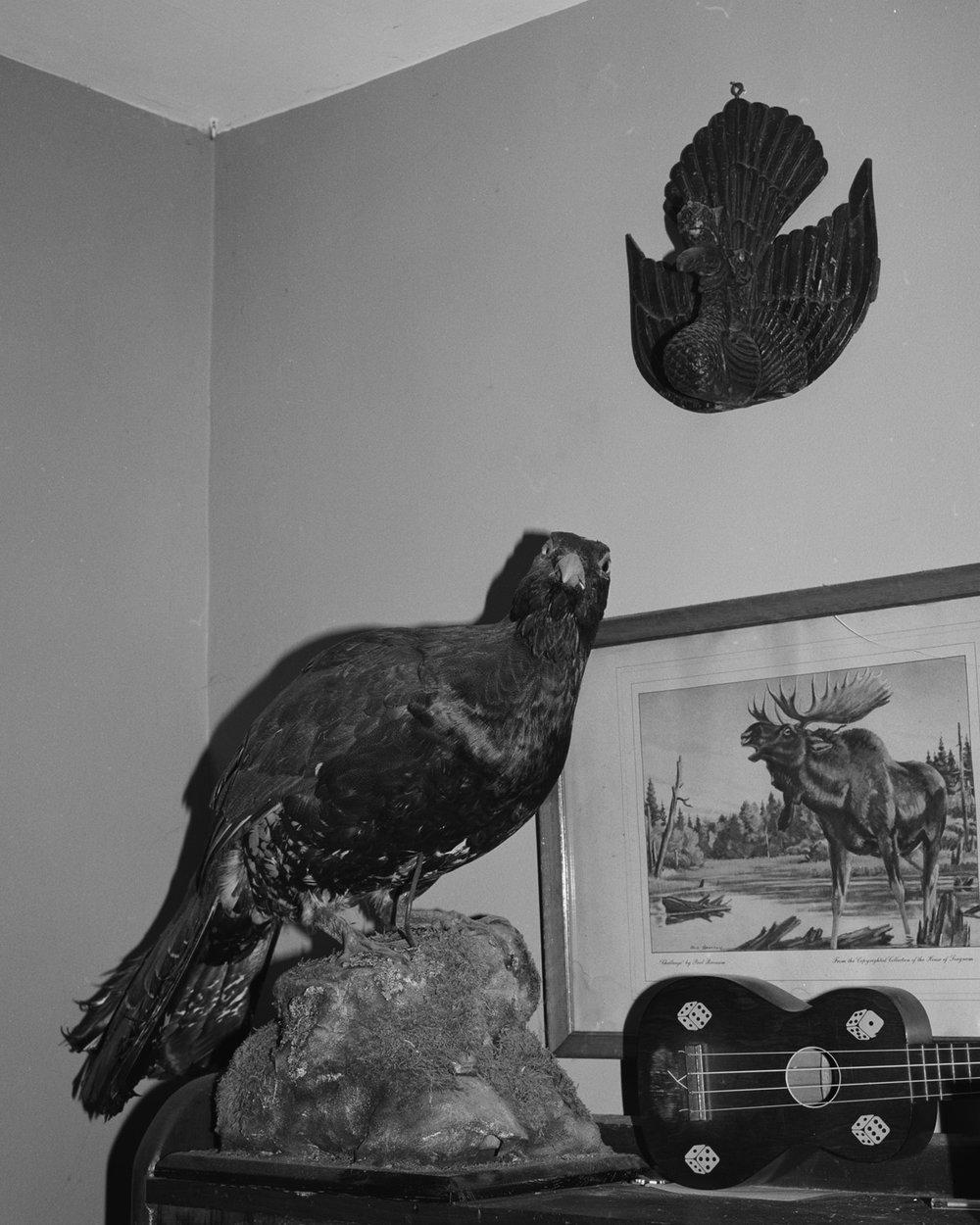 adamsbird.jpg