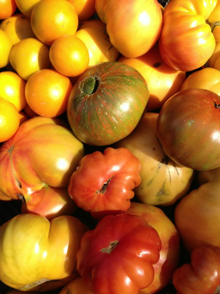Invincible Summer Farms heirloom tomatoes