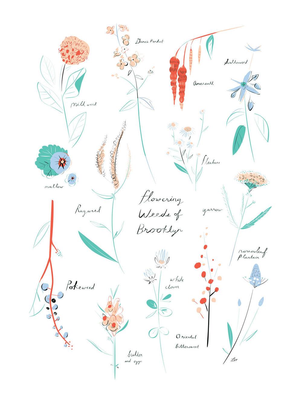 floweringweedsofbrooklyn_libbyvanderploeg