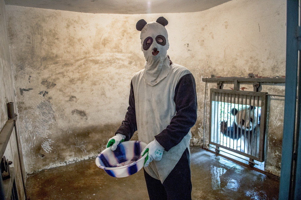 A keeper in disguise cleans a panda enclosure under the watchful-eye of a real panda at China's Wolong National Nature Reserve, in Sichuan province. 2013   © Ami Vitale