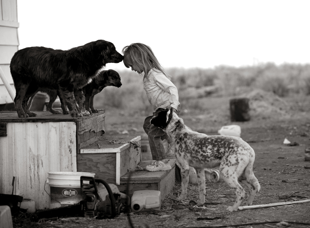 Three-year-old Lakota Vanessa Rene Douglas plays with some of the 10 dogs that live on her grandfather's 40 acres in the San Luis Valley. © Joe Amon/The Denver Post