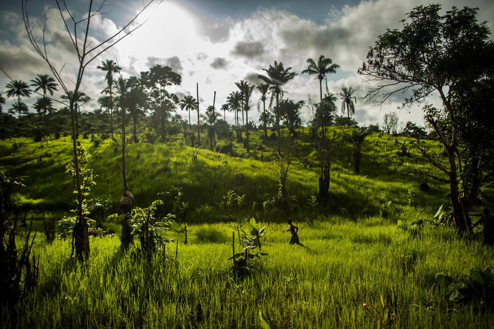 A boy wanders through a field of rice near the village of Dia, Sierra Leone on Monday, August 18, 2014. Sierra Leone has been heavy affected by the Ebola outbreak in West Africa with many of its cases found in rural areas. © Pete Muller/Prime for the Washington Post