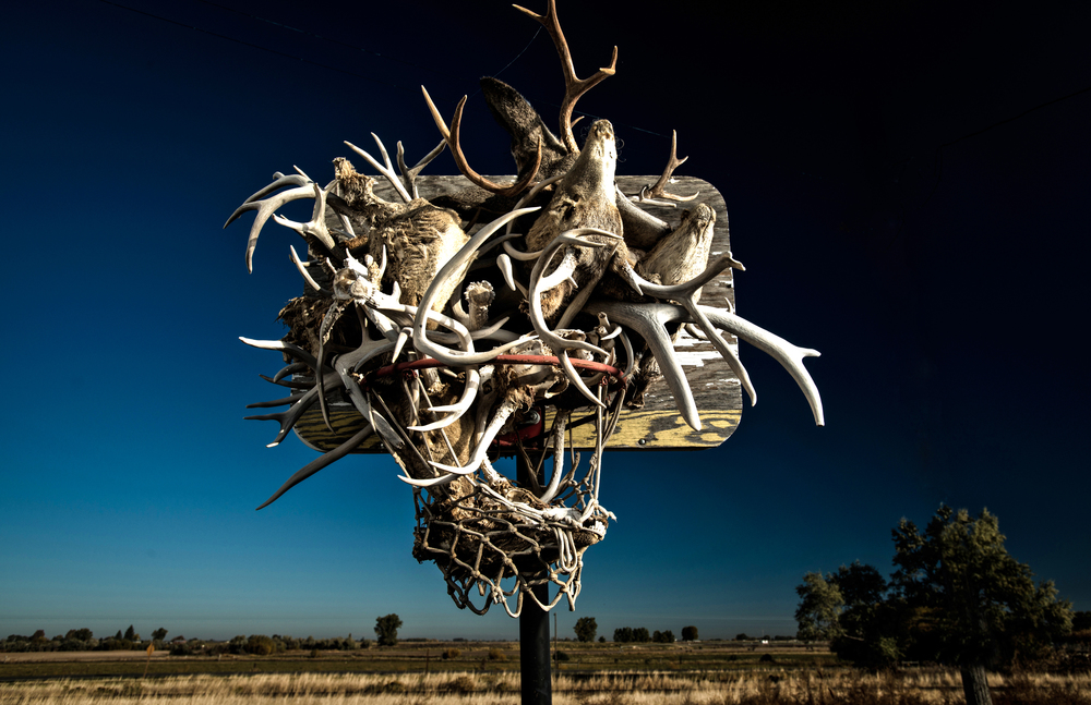 Deer heads and antlers fill an old basketball hoop in Idaho © Rob Hammer