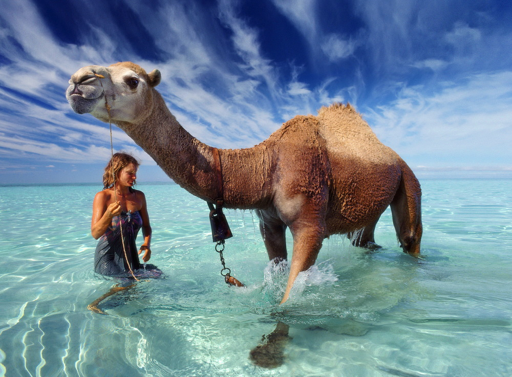 After nine months and 1,700 miles, Robyn Davidson arrives with her camels for a dip in the Indian Ocean. The cover of INSIDE TRACKS.  © Rick Smolan/Against All Odds Productions