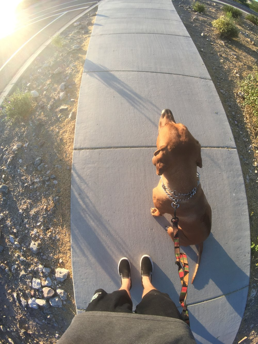 Sunrise dog lap with Samwise the Rhodesian Ridgeback.