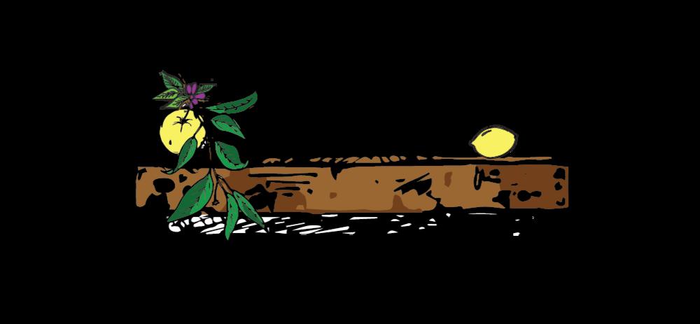 Website_Drawings_Turmeric_lemon2-03.png