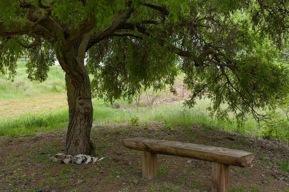 tree & bench.jpg