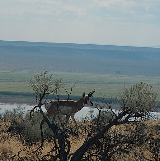 Scouting Trip to Southeast Oregon_Page_53_Image_0001.jpg