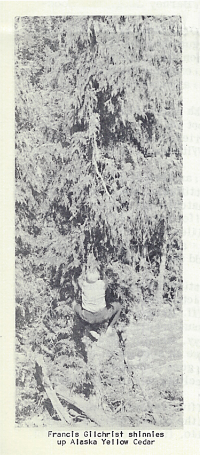 04.1-Cedar-shinnies.jpg
