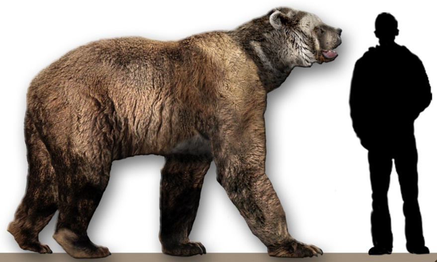 Arctodus simus (short faced bear) reconstruction, photo by Dantheman9758, June 26, 2007.