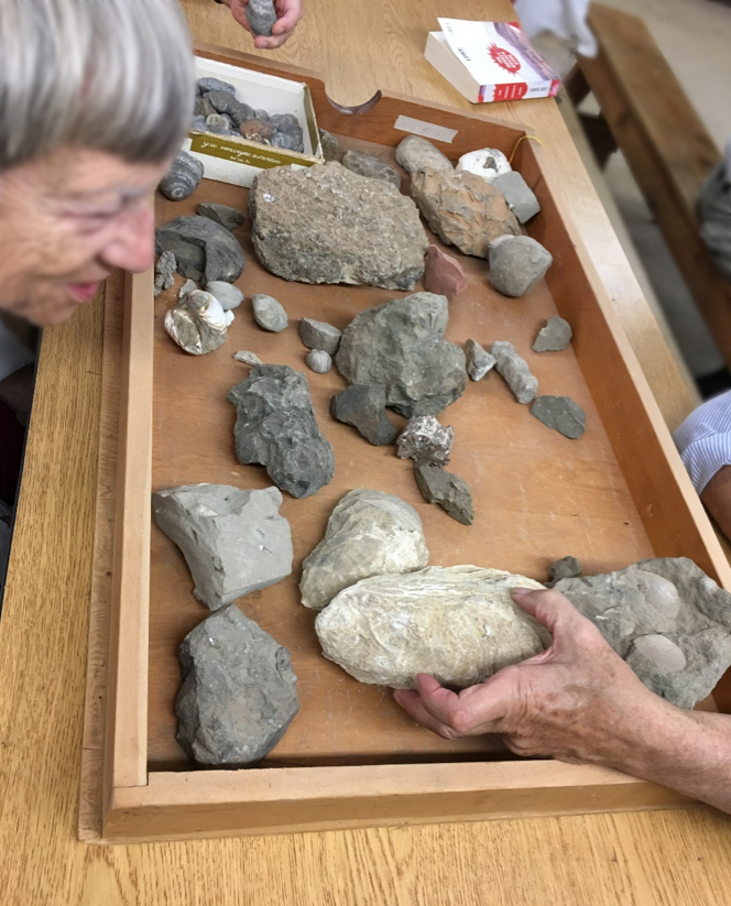 Nancy Overpeck inspects one of the fossils in the lab. Photo by author.