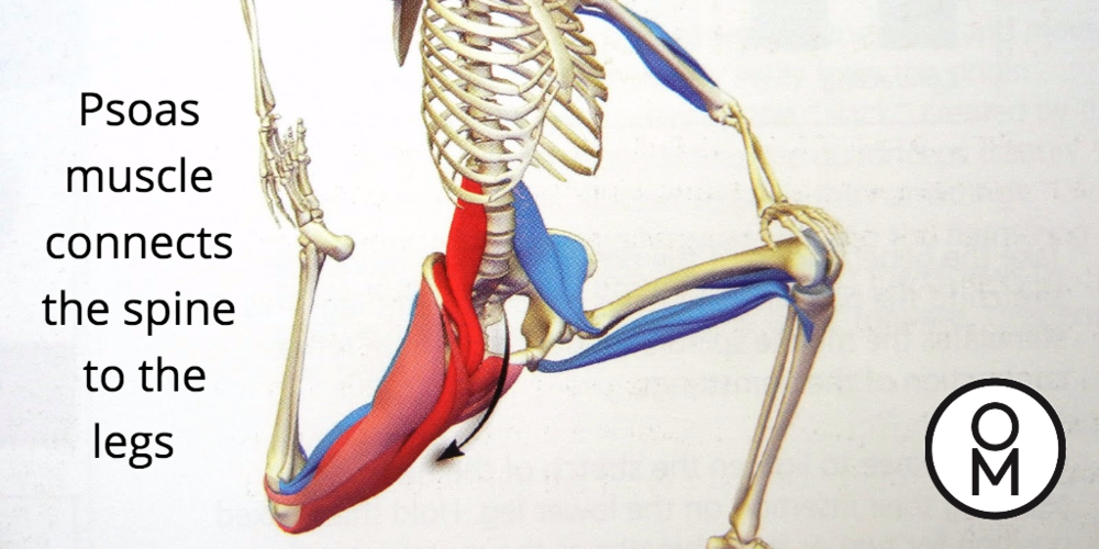 The Psoas Connection Omega Movement