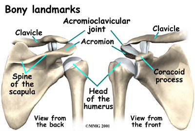 shoulder_acromionclavicular_arthrosis_anat02.jpg