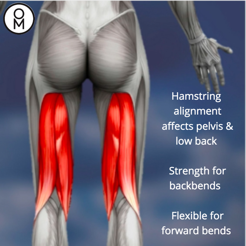 Alignment Hamstrings.png