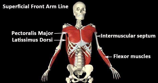 superficial front arm line fascia.jpg