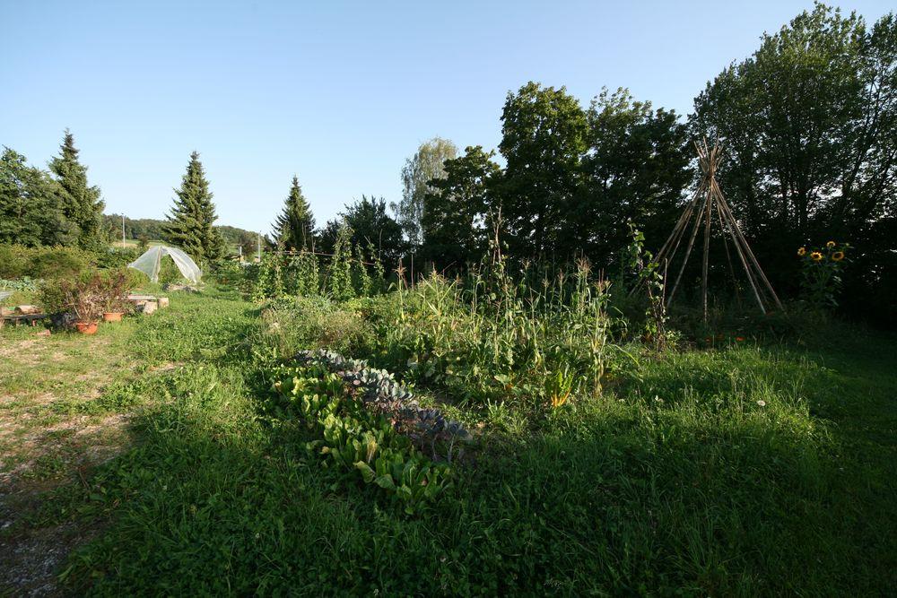 Garten grün und schön.jpg