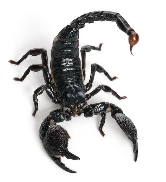 venom-Scorpion_624.jpg