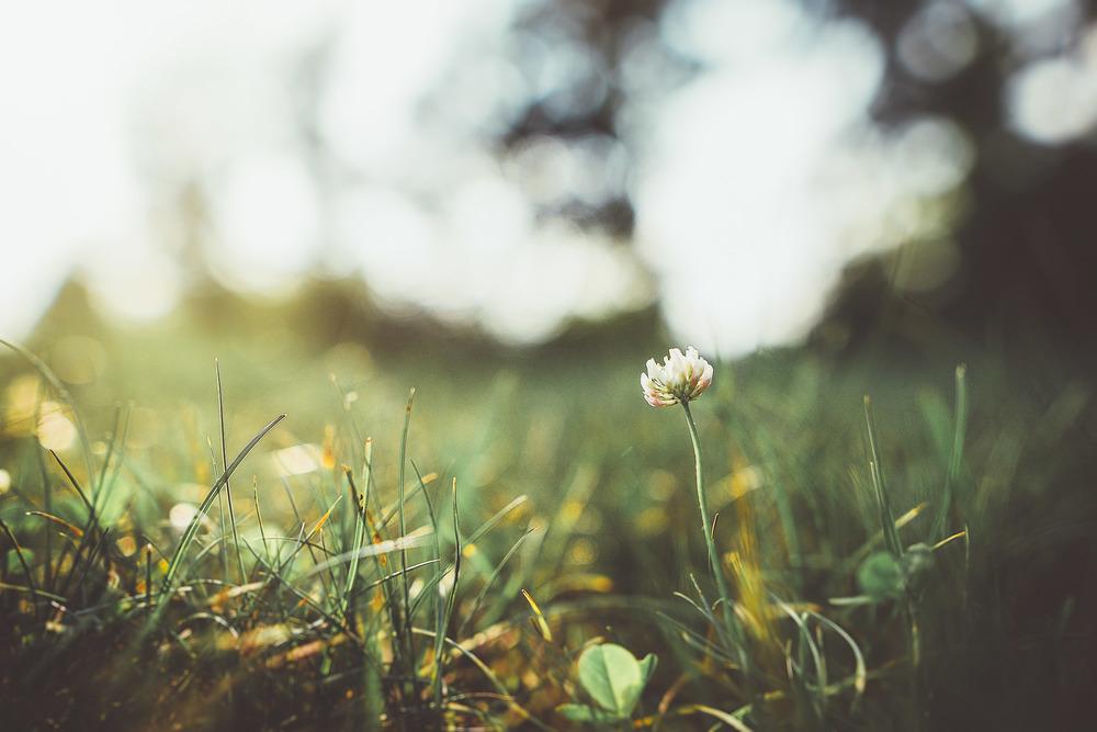 weeds-2.jpg